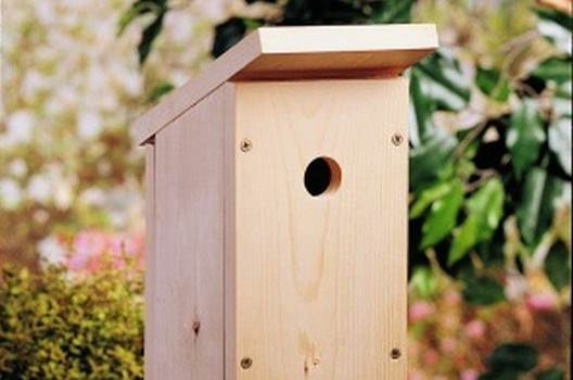 A Birdhouse for Beginners