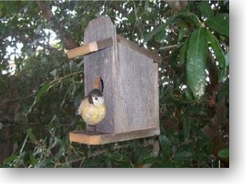 Birdhouse/Bird Feeder