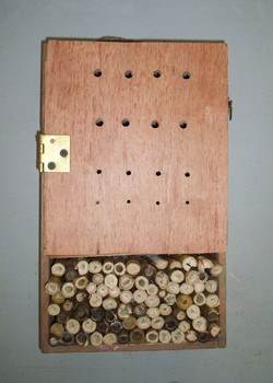 Bug House Project