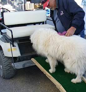 Car Access for Dogs