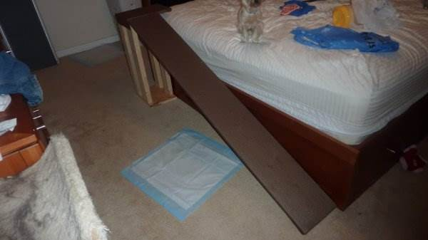 Build Dog Ramps Cheap