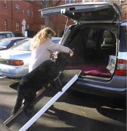 Dog Ramp Solutions